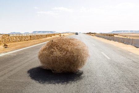 Giant tumbleweed on the highway with sandy dunes, between el-Bahariya oasis and Al Farafra oasis, Western Desert of Egypt, between Giza governorate and New Valley Governorate, near White Desert Standard-Bild