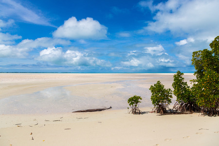 Yellow beautiful sandy paradise beach of azure turquoise blue shallow lagoon, North Tarawa atoll, sunny day, Kiribati, Gilbert Islands, Micronesia, Oceania, South Pacific Ocean. Palm trees, mangroves