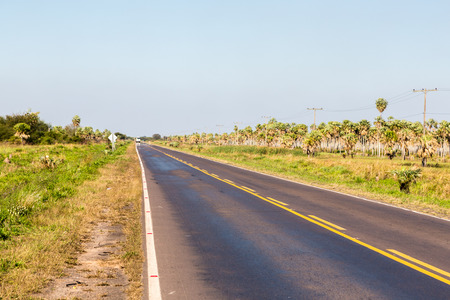 National Route 9 highway runs through a palm forest and grasses of Paraguayan Chaco savannah, Paraguay. Ruta Nacional Numero 9 Dr. Carlos Antonio Lopez. Ruta Transchaco. Yellow axial line. Imagens
