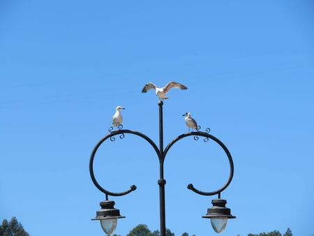Beautiful gulls of great beauty and nice color mugging for the camera 写真素材 - 128781324