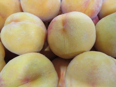Beautiful picture of mature peaches of great taste and good color