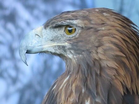 Beautiful picture of birds of prey of great size and penetrating stare Stock Photo