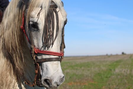 Beautiful horse ready to run with the dogs behind the Hares Reklamní fotografie