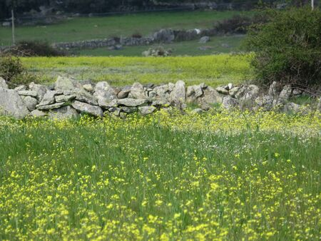 Beautiful stone wall that separates the fields and animals Banco de Imagens