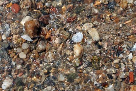 seachells in beach photo