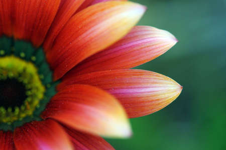 serenety: red flower with shallw depth of field