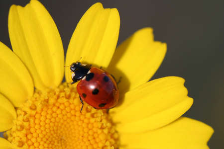 serenety: macro of ladybug in flower