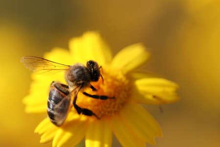 serenety: macro of bee in flower