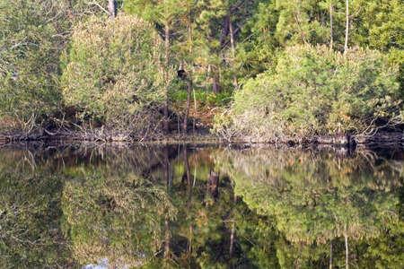 reflexion: Los �rboles con agua de reflexi�n