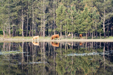 animal reflexions in the still lagoon Stock Photo - 1124194