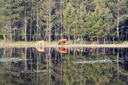animal reflexions in the still lagoon Stock Photo - 1124194