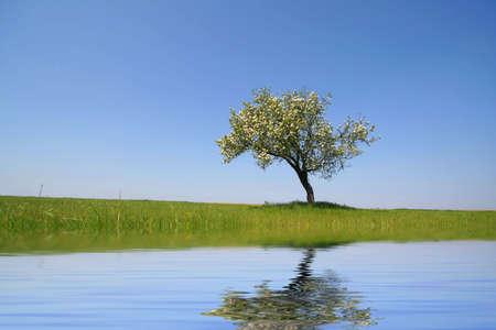 reflexion: solo �rbol con la reflexi�n en el agua