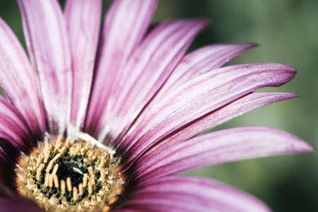 serenety: Close up macro photo from pink flower