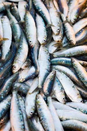 sardine: Sarde fresche imballate al mercato all'aperto