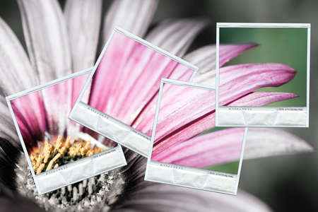 Composition with a group of polaroids photos restoring the color on a black and white background photo
