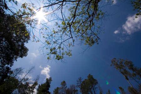 sunrays beetween trees photo
