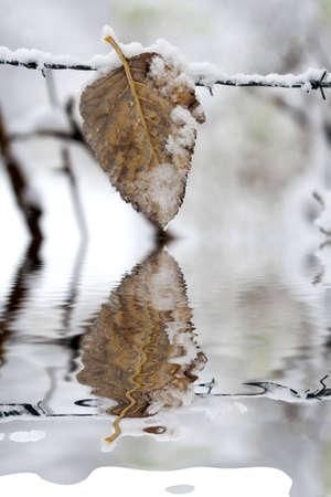 reflexion: feaf reflexi�n en el agua congelada  Foto de archivo