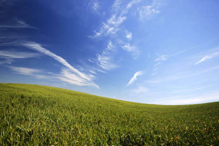 beautiful landscape with green grass and blue sky Stock Photo - 2988875