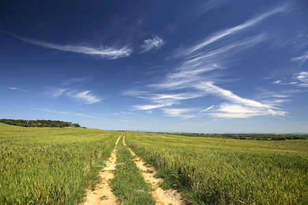 empty road: empty road in beautiful rural landscape Stock Photo