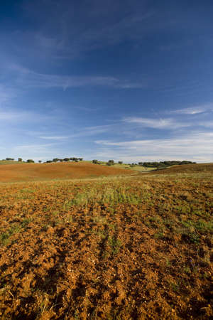 dry field in a hot summer day photo
