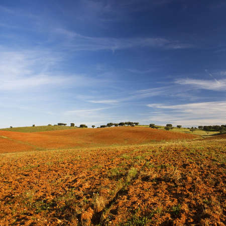 empty and dry rural landscape photo