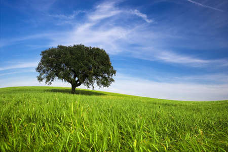 Lonely tree in spring landscape with green grass and blue sky Stock Photo