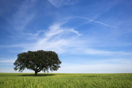 lonely tree in spring landscape with green grass and blue sky Stock Photo - 3114363