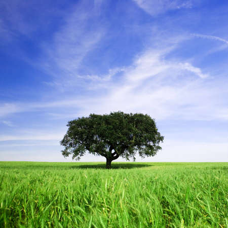 lonely tree in rural landscape Stock Photo - 3114362