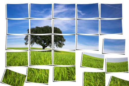 group of multiple filmstrips composing a landscape scene