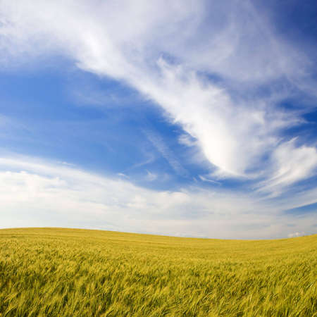 landscape with rural field and beautiful sky Stock Photo - 3114547