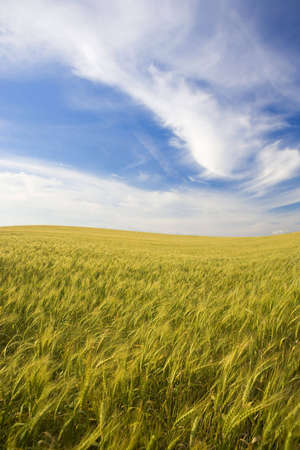 landscape with rural field and beautiful sky Stock Photo - 3114548