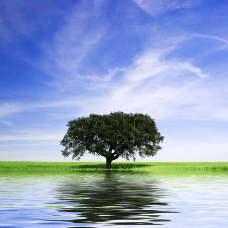 lonely tree in rural landscape Stock Photo