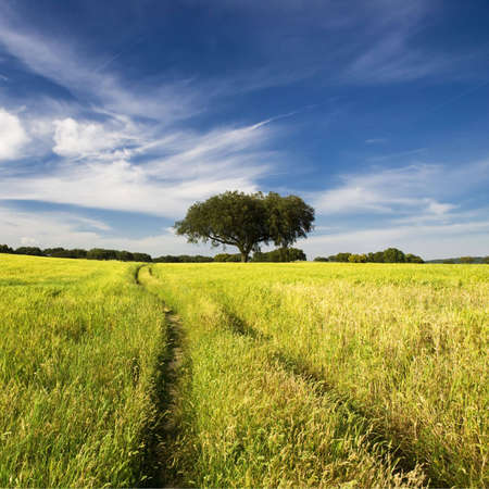 summer landscape with tree and path Stock Photo - 3259658