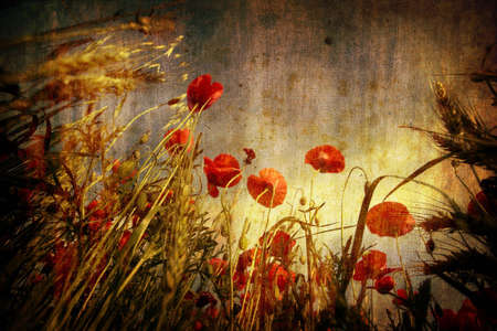 red poppies in grunge background photo