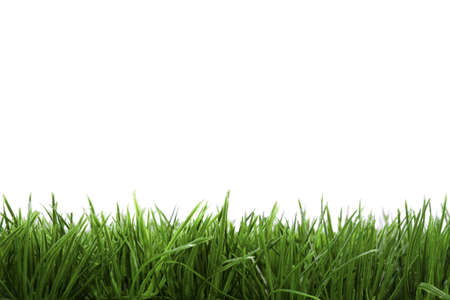 frame background with green grass isolated on white background