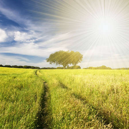 summer landscape with tree and path Stock Photo - 4594713