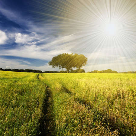 summer landscape with tree and path - square format Stock Photo - 4697877