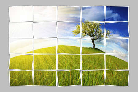 Multiple filmstrip photo frames composing summer landscape with lonely tree photo