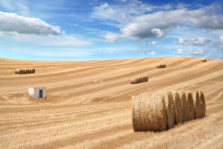 rural field after season crop - landscape orientation