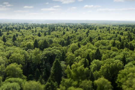 greenness: Fly on the forest