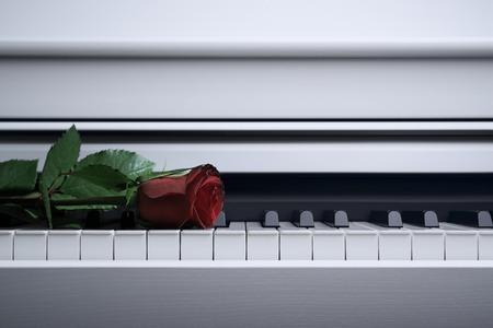 pianoforte: red rose Stock Photo