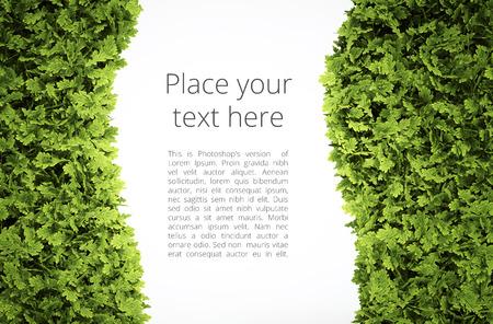 sustentabilidad: Marco de texto de Eco con el patrón de texto simple - camino de recortes de la hoja verde shape incluido
