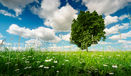 3d illustration of a tree in a fresh spring meadow under a beautiful blue cloudy sky.