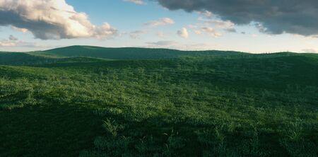 Fresh spacious grass meadow in beutifull evening light. 3d rendering.