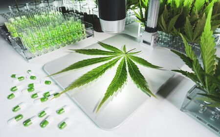Concept of a Cannabis in medical research. Fresh marijuana leaf on microscope surrounded by test tubes with thc tinctures, leaves and pills in clean white hi tech laboratory environment. 3d rendering. Foto de archivo