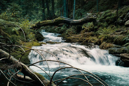 Wild cascade river situated in cold evening  forest mountain environment.