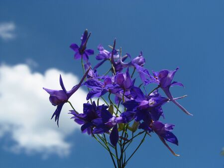 Delphinium Guardian Flower. Macro shot. Soft focus background with blue sky. Florianópolis, Santa Catarina / Brazil Banco de Imagens