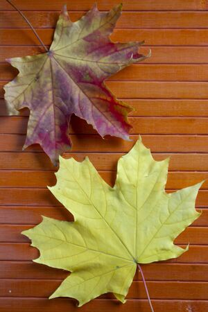 Autumn. Maple leaf on a wooden table