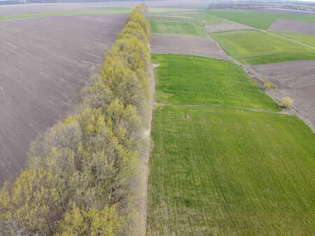 Green and plowed fields in spring, forest stripes and trees that turn green in spring.