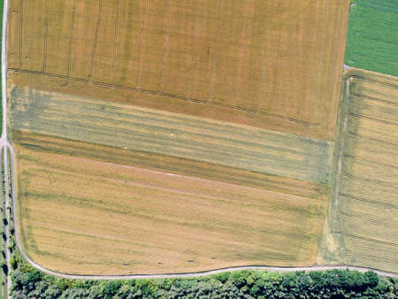 Top view of an agricultural field with crops of wheat of different varieties, tractor tracks on the field.